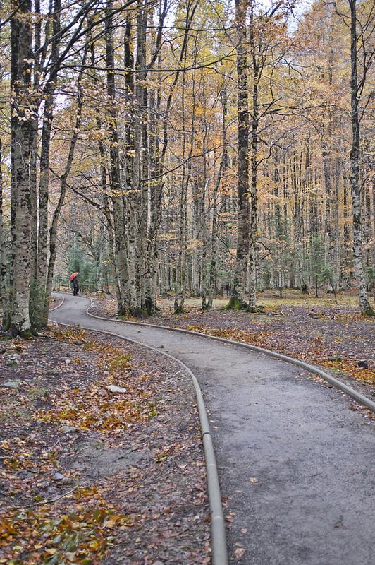 El camino del bosque