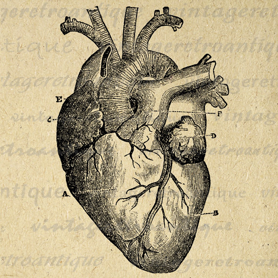 photograph relating to Printable Heart Diagram identified as Common Middle Diagram Printable Electronic Impression Image No.1
