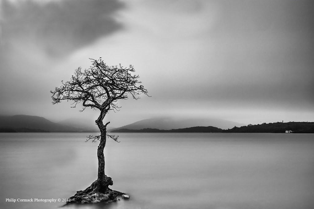 Lone Tree on Loch Lomond