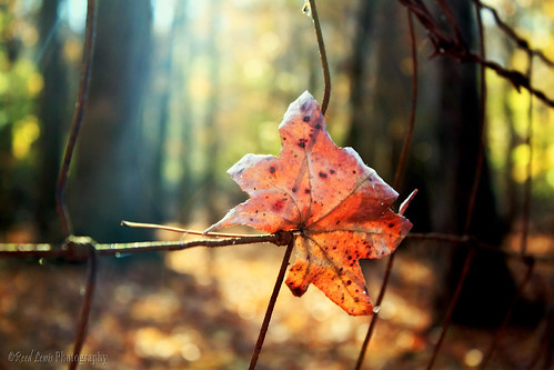 autumn trees fall nature canon fence season leaf woods forrest bokeh barbedwire change