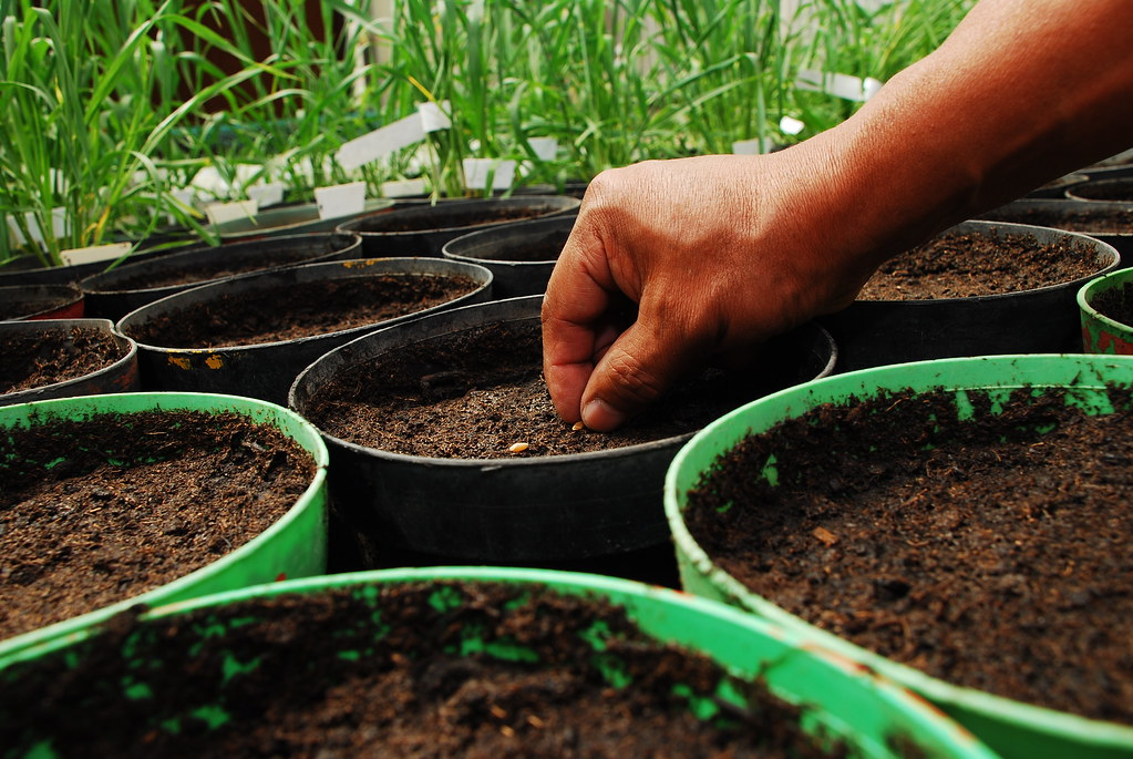 Get Free Credit Report >> Planting seeds of knowledge | A CIMMYT researcher plants ...