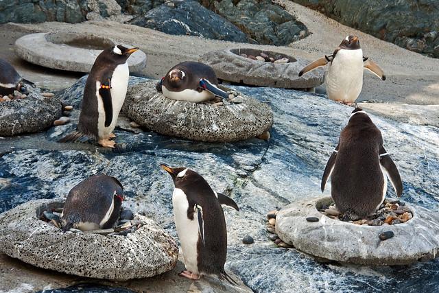 Penguin_In_Zoo 1.4, Bergen, Norway