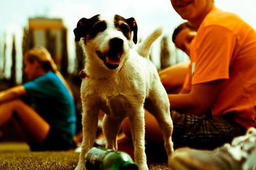 smilling dog