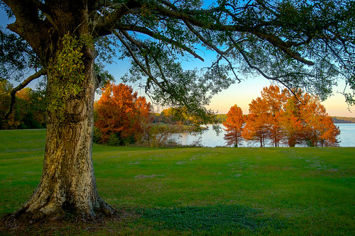 trees orange lake tree mississippi unitedstates jackson fallfoliage madison cypress goldenhour natcheztrace fav10 longlight rossbarnettreservoir