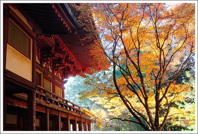 20121125_6330_京都之秋