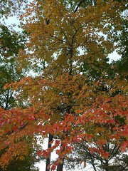 日, 2012-10-21 17:42 - 紅葉