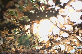 Camouflage Sun