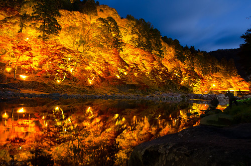 autumn japan maple momiji toyota mapletree 紅葉 outono koyou 香嵐渓 korankei 豊田市