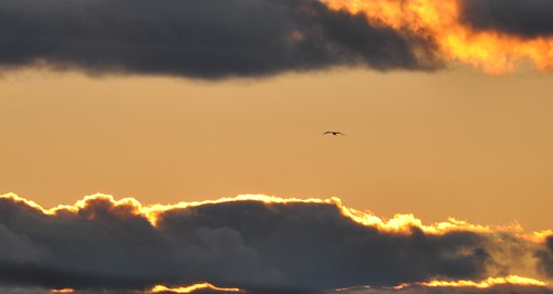 sunset sky bird yellow clouds fire nikon gull 300mm f4 cloudporn d90