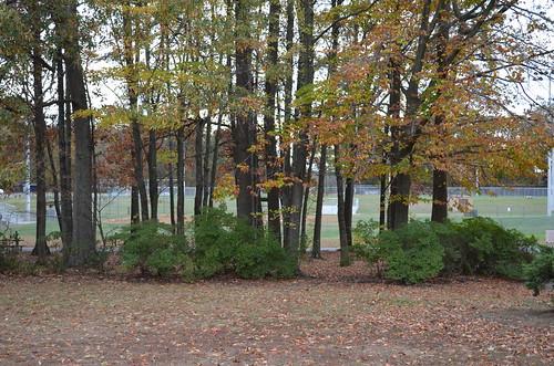 parksandrecreation fredericksburgvirginia baseballfields staffordcounty falmouthvirginia saintclairbrookspark 80butlerroadfredericksburgva22405