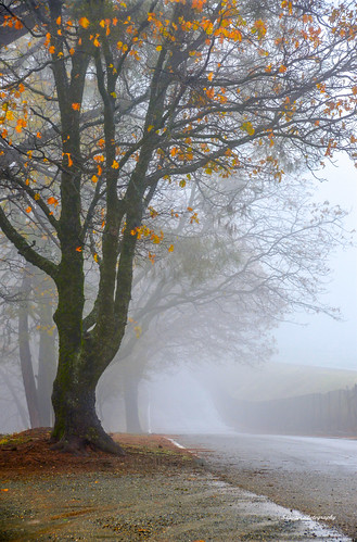 airport road placerville california usa leaves fog mist bare orange slope tphofweek253 thepinnaclehof tree trunk branches shape photograph bent twisted landscape outdoors nature bark