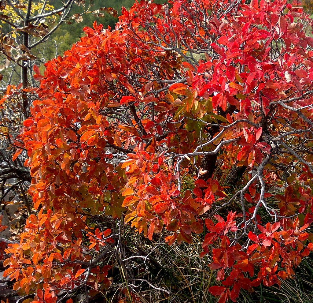 "Image result for trenerki so autumn beautiful"""