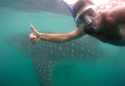 Fri, 2012-12-14 12:33 - Whalesharks