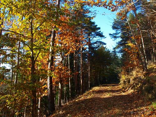autumn portugal walking hiking centro outuno serra floresta lousã caminhadas