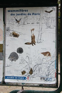 Urban Environments: Mammals in the parks of Paris   by Richard Allaway