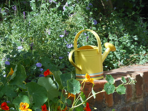 Watering Can | by mikecogh