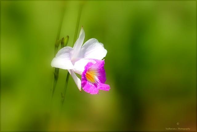 Delight in the Garden .......   [ Explored ]