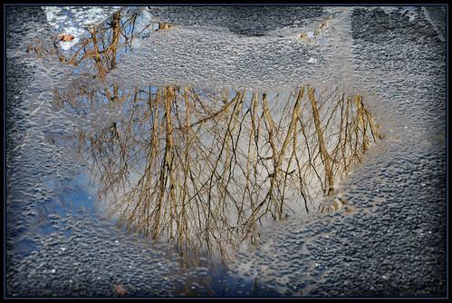 trees winter water reflections puddle flickraward nikonflickraward