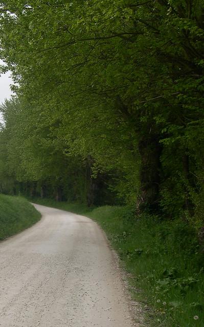 Pace e tranquillità in una strada di campagna marchigiana/Peace and tranquility in a Marche countryside road