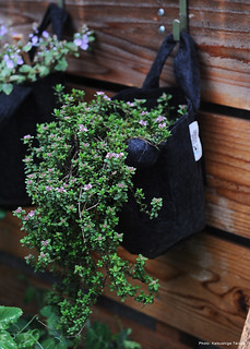 Thyme in Root Pouch 1gallon Black w/handle | by Katsushige Bon Terada