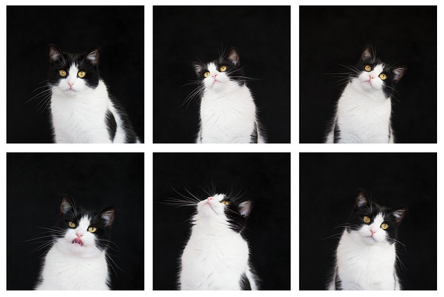 The many faces of Tig
