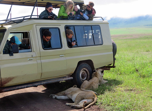 lions-shade-safari-vehicle | by quirkytravelguy