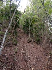 illegal-trail-cut_43259524552_o