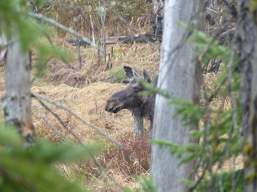 Algonquin May 2018 (5)   by Brown Bear Travels