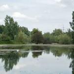 Teich mit Algenblüte im Deichbinnenland