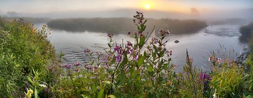 panorama dawn sunrise goldenhour landscape river mist morningmist wildflowers grandriver inverhaugh wellingtoncounty ontario canada olympusomdem5 panasoniclumix20mmf17 oloneo microsoftice gimp