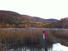 日, 2012-10-21 16:18 - Iona Marsh & Iona Island