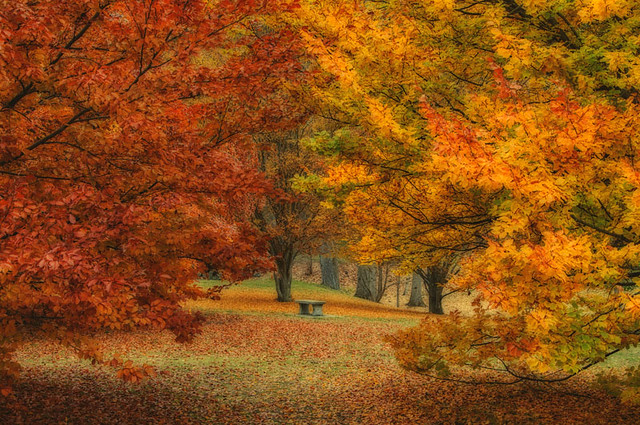 A Finch Arboretum Autumn