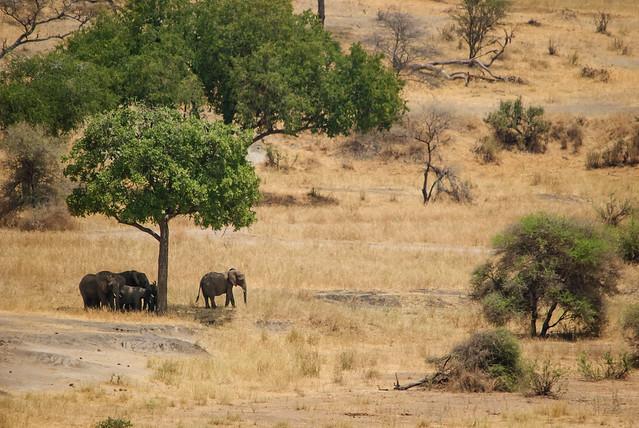 Tarangire National Park, Tanzania - Tiny Elephants
