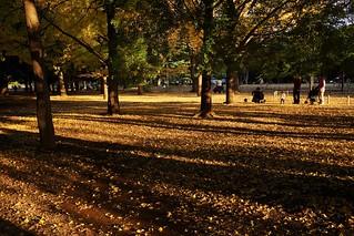 Daylight@Yoyogi park@Tokyo_03