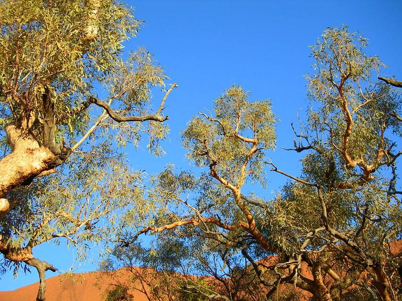 VIAGGI: AUSTRALIA 2012 - 455