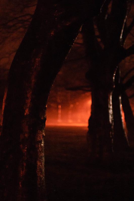 bent tree and fog