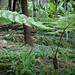 2012-11-23 Thailand Day 05, Royal Garden Siribhum, Doi Inthanon National Park