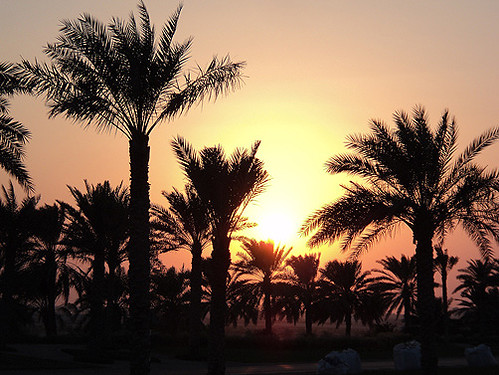abudhabi sunset airport emirates unitedarabemirates sascha grabow getty saschagrabowcom trees tree palm palms desert middleeast mittlererosten sonne sun sonnenuntergang gettimagesartist idyll nature peaceful natur capitaloftheemirates moyenorient plantage plantation planta plantacion puestadelsol atardecer ocaso सूर्यास्त 日落 阿布扎比 अबुधाबी orange yellow sand dust brown sundown hazy plant palmtree outdoor sky landscape field saschagrabow