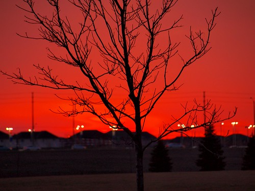 sunset sun ontario canada tree silhouette set mississauga