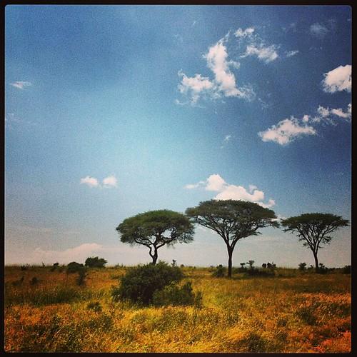 square kenya squareformat iphoneography instagramapp uploaded:by=instagram