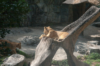 2012-11-21 Thailand Day 03, Chiang Mai Zoo   by Qsimple, Memories For The Future Photography