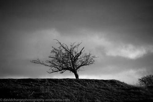 uk winter england tree monochrome blackwhite kent cloudy lone sevenoaks knolepark sonyalpha sonya850