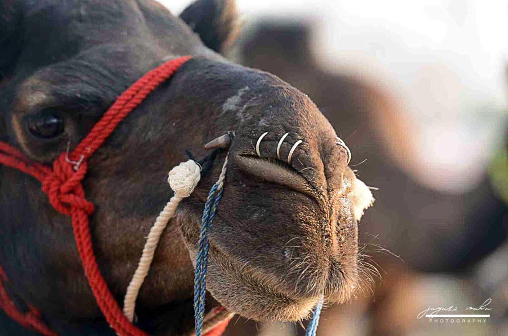 Nose Ring Jayati Saha Flickr