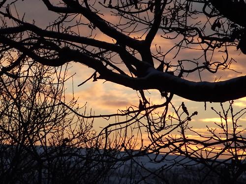 tree silhouette swansea wales sunrise clydach