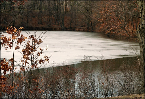 trees winter cold tree ice nature water leaves reflections pond branches icy frozenwater rogerwilliamspark waterreflection providencerhodeisland frozenpond waterreflections providenceri icywater winterscenery winterreflections icypond frozenreflection
