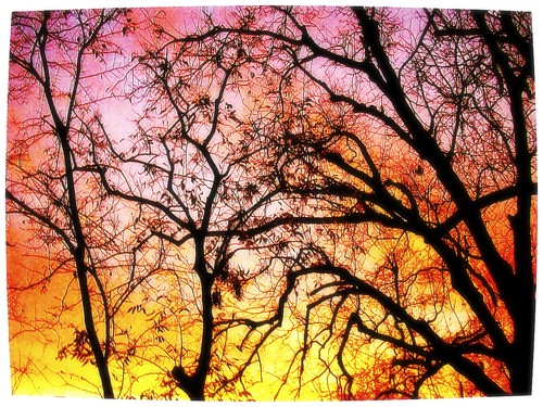 trees winter sunrise texas arboles kodak hiver houston amanecer arbres aviary invierno leverdusoleil m753 houstoneastend vimfur