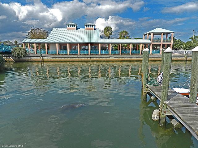 Manatee Center