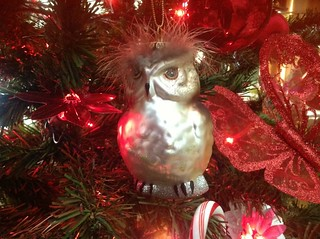 New owl from my son