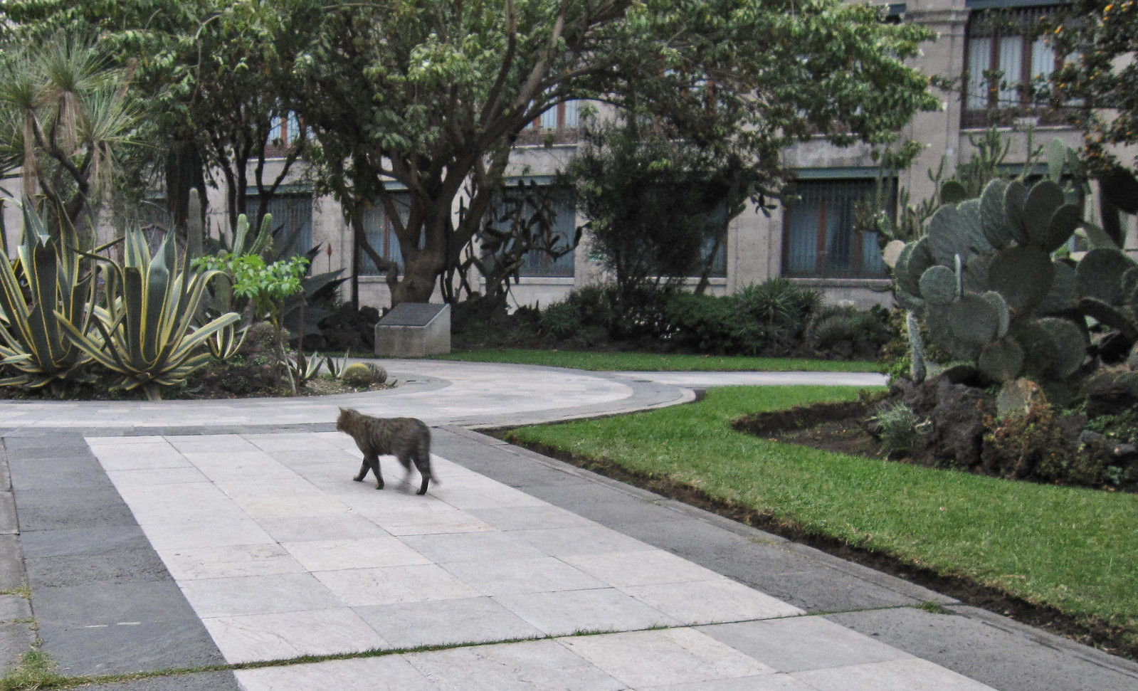 Ciudad de México 696