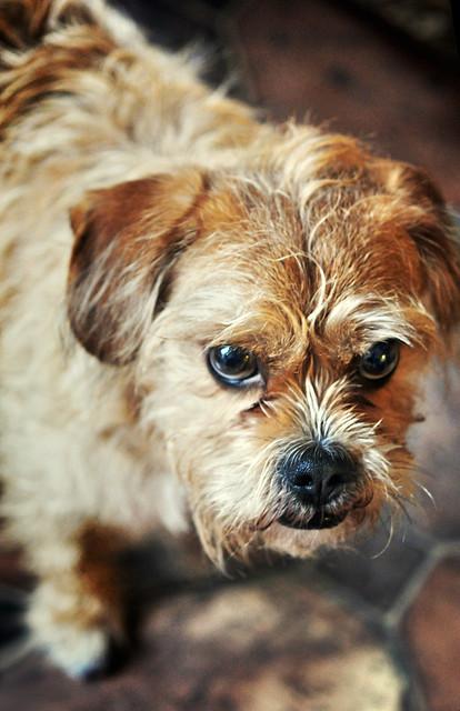Grumpy Mutt